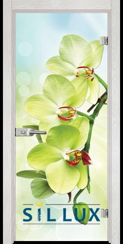 Стъклена интериорна врата Print G 13 3 Green F