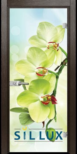 Стъклена интериорна врата Print G 13 3 Green K