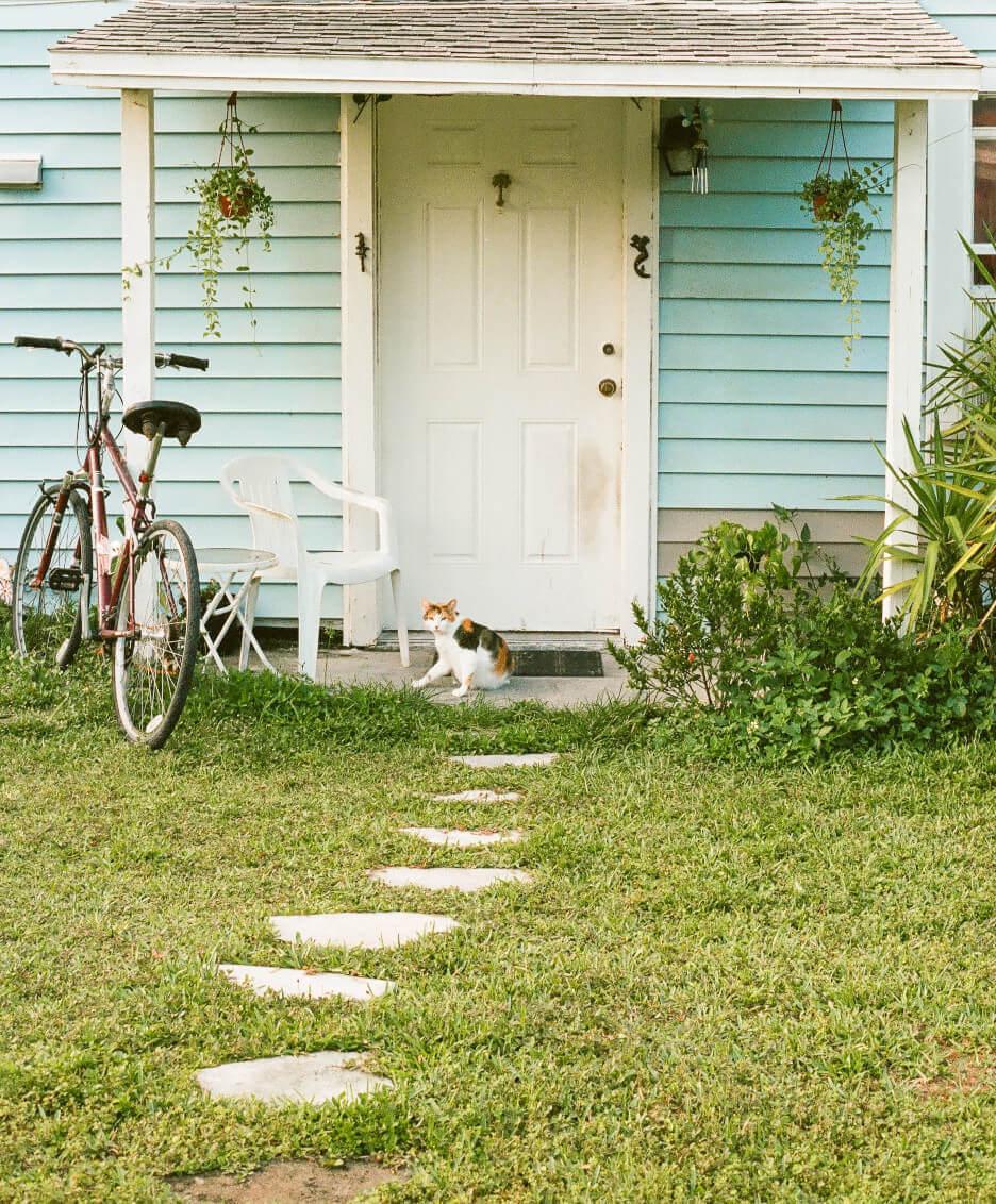 Стара врата навес  котка и колело